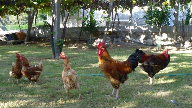 A Casa Dos Martinez / Cooking Blog. : POSTALES DESDE LA ALDEA..
